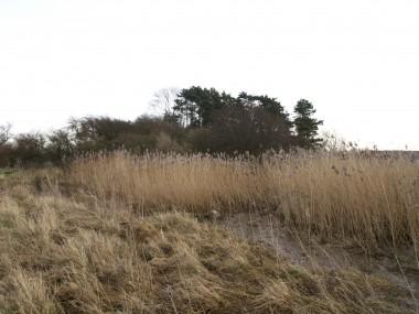 Forhøjningen i baggrunden, nu bevokset med træer, blev i den yngre del af vikingetiden (900-tallet) brugt som gravplads. Foto: S. Eisenschmidt.