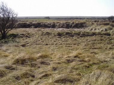 Blik over marsken og golfbanen fra det område, der skulle bebygges.