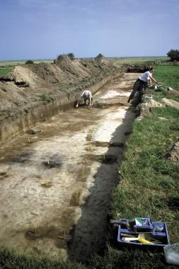 Skråt igennem feltet løber resterne af en væg fra et 1200-tals hus. Foto: Tenna R. Kristensen.