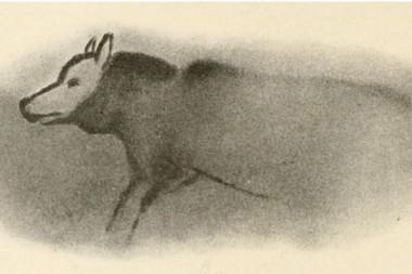 4. Det berømte hulemaleri fra Dordogne i  Frankrig af en ulv. Ulven er skildret venlig og tillidsfuld som en hund. (foto: Postkort efter  Capitan et Breuil 1910)