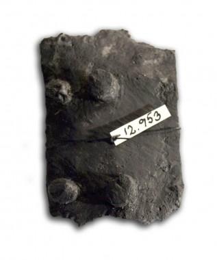 Pladen blev  fundet i kælderens fyld. Bemærk de fire nitter, der har holdt pladen fast på en trøje af læder.