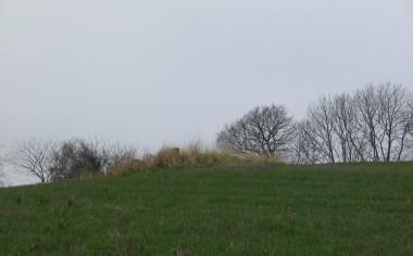 Gravhøjen  ved Løjt Dyrehave på toppen af bakken